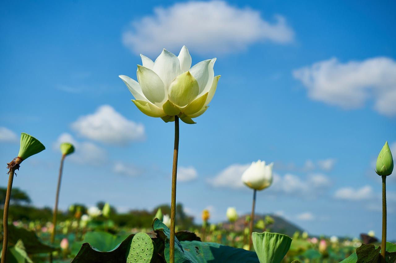 A Lotus Connection Yoga Retreat Chiang Mai